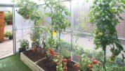 Steeltech Greenhouses Img09