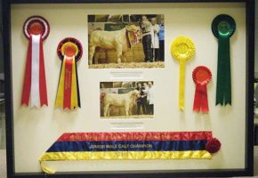 rosettes framing
